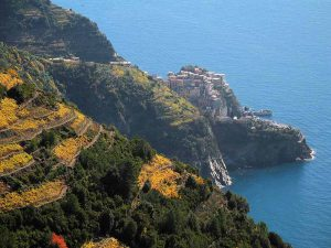 Cinque Terre Terraced Vineyards