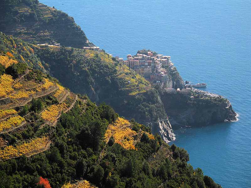 Cinque Terre Terraced Vineyards